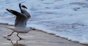 Seagull 04 by 88-Lawstock