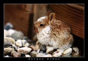 Little Bunny. by sergey1984