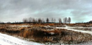 Birch Grove. by DenChetto