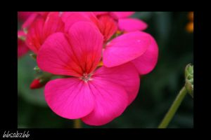 Pretty in pink by 66sabz66