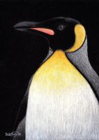 King Penguin by tuftedpuffin