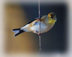 Bird on a Wire by barcon53