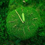 it`s five minutes to green by indojo