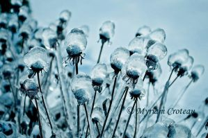Ice bubbles by Aliniel
