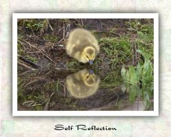 Self Reflection by Merlinstouch