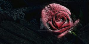 Rose-73162 by KF53