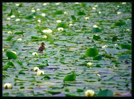 lost in the lilypads by kimbalina