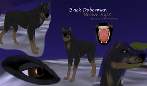 Black Doberman BROWN EYES by rockonhammy