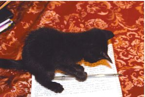 MY CAT can pick UP A pen by seasonscall