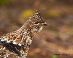 Ruffed Grouse Portrait by Les-Piccolo