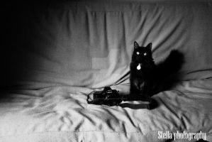 Photo and Feline Affinity by stellasnaps