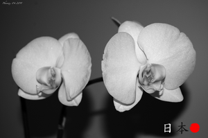 Orchids, haiku, and Japan. by GMPhoenix