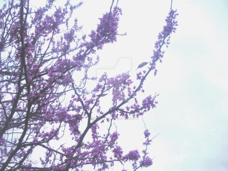 Cherry Tree by Fo0lishGirl