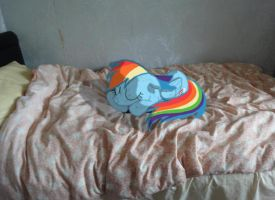 Dashie sleeping on my bed by wingdune41