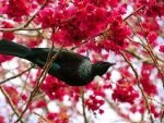 Tui by Lionessrules