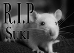 Rest In Peace - Suki by Saerl