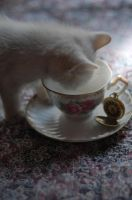 tea for kitty by nikkhidragonfly