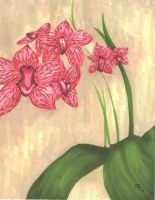 Orchids by Lisbeth1994