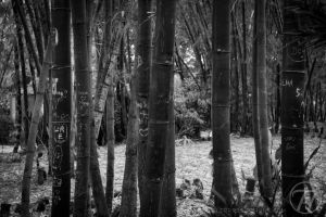 Bamboo2 by Swaptrick