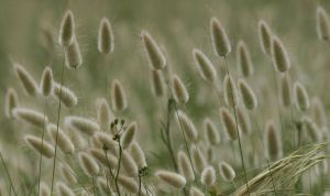 seed heads by yorkshiregrit