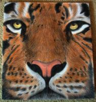 Tiger *Finished* by Becky125