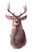 Watercolor deer by Lesard