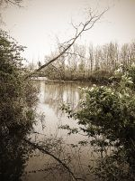 Looking Out At The Pond by electricjonny