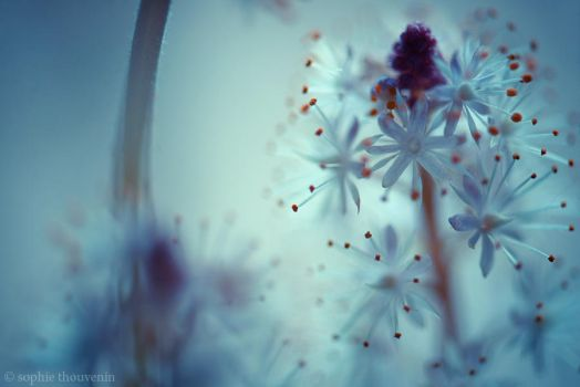 soft morning by prismes