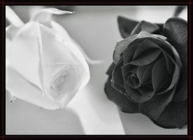 Two Roses by DioTuo