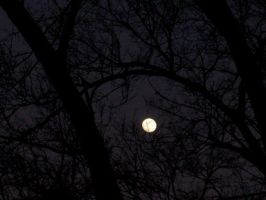 Moon Through the Trees II by musicjunkie09