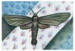 Mothlike Mind ACEO by AshleighPopplewell