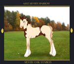 6502 Silver's Sparrow by SilverOakStables