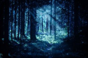 Forest Path 12 by Pagan-Stock