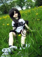 Field of Buttercups by Lavandula-BJD