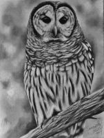 Barred Owl Portrait by sjhowell11