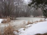 Winter Swamp Background 3 by FantasyStock