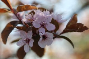 Flower Stock 22 by Malleni-Stock