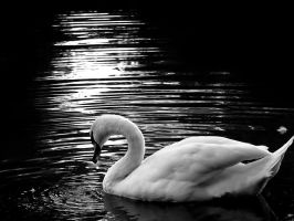 Swan.. by spns