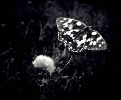 The Moth Effect by Anca-Mihaela