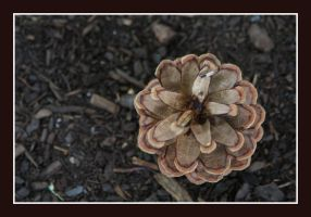 Pinecone by greenwalled1