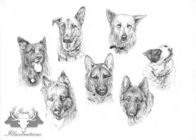 Inca, Fifi, Jake, Ben, Lulu, Zamba, Maz commission by Gaia-Illustrations