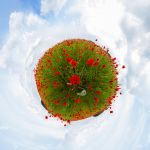 Poppy world by Quincula