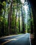Avenue of the Giants II by DanielGliese
