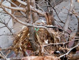 Empty Small Nest by citynetter