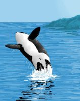 a orca whale by Orcas-lover