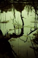 .swamp by shiek0r