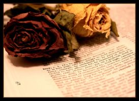 The Love Verb by TeaPhotography