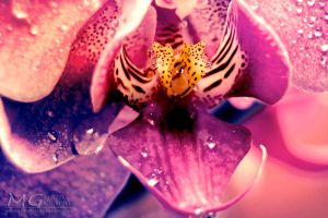 Orchid by martita80