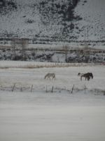 Horses in the Snow from the Train by Mistgod