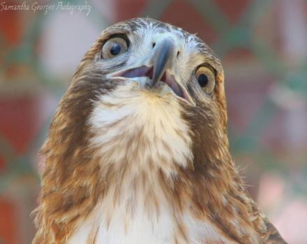 Whyyy??? by SGeorgesPhotography